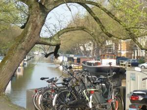 Vieil arbre et vélos